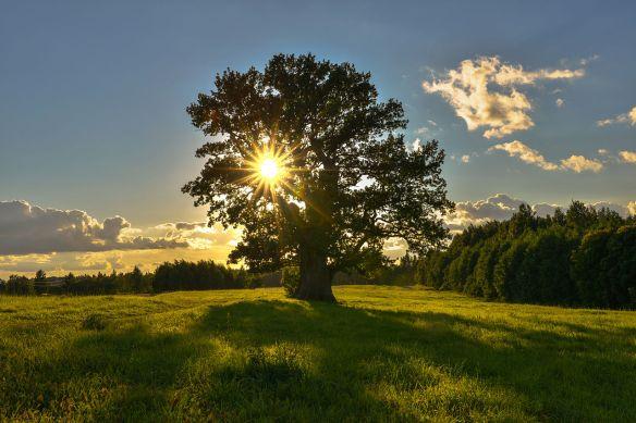 Tamme-Lauri oak. The oldest tree in Estonia