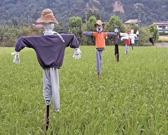 Scarecrows out standing in a field