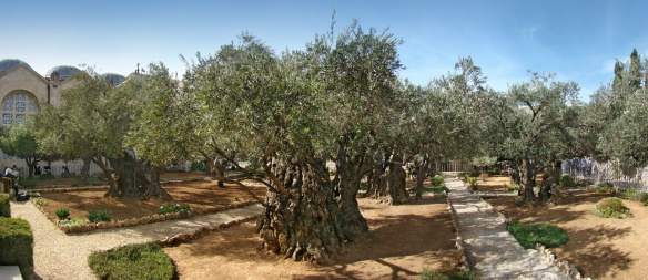 Garden of Gethsemane, Mount of Olives, Jerusalem